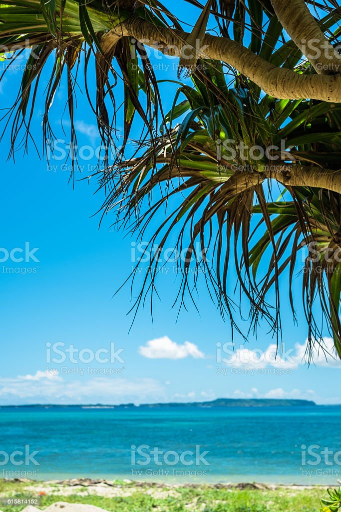 Trees and blue Okinawa sea beach of Adan stock photo