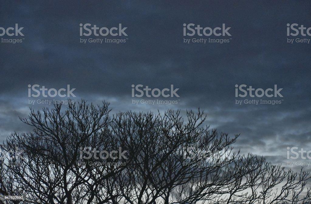 Trees and Blue Sky at Dusk stock photo