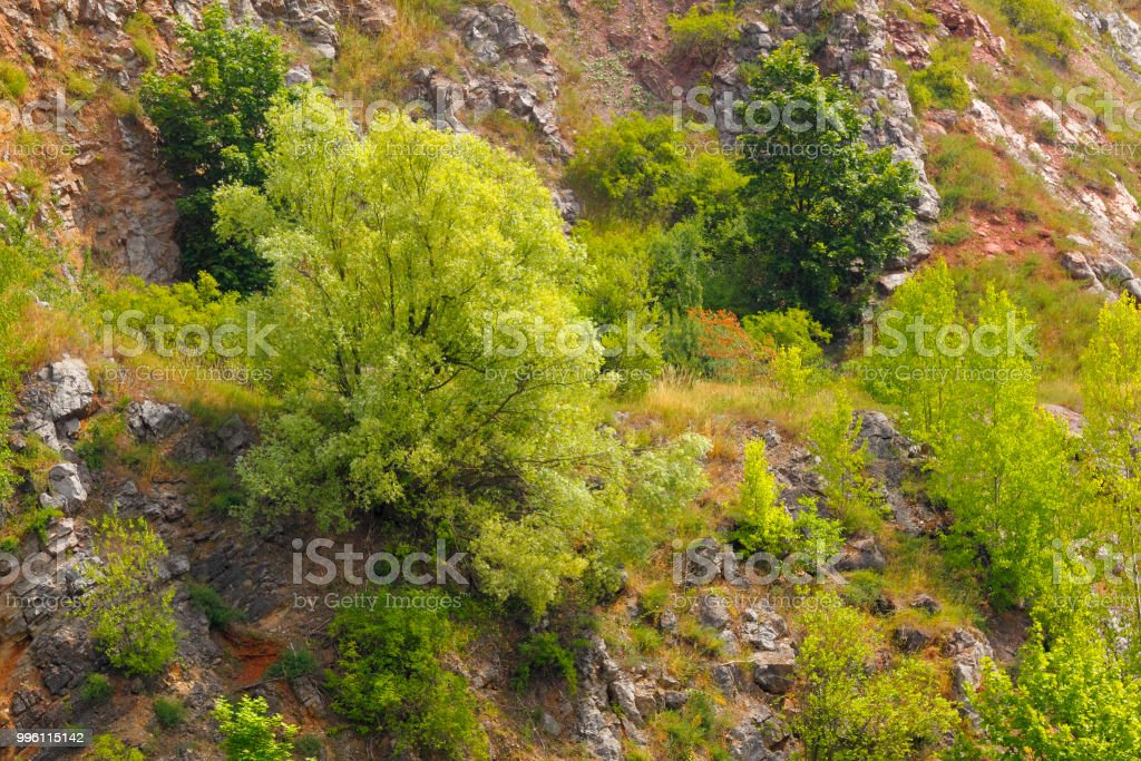 Trees and bushes on a rocky slope stock photo
