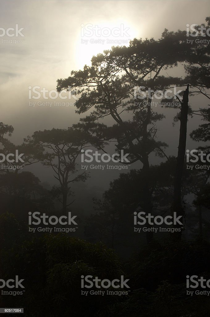 Trees and clearing mist royalty-free stock photo