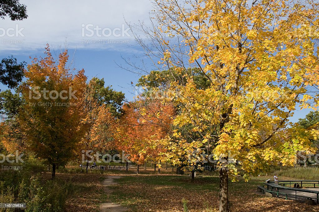 Trees and clouds in the park royalty-free stock photo