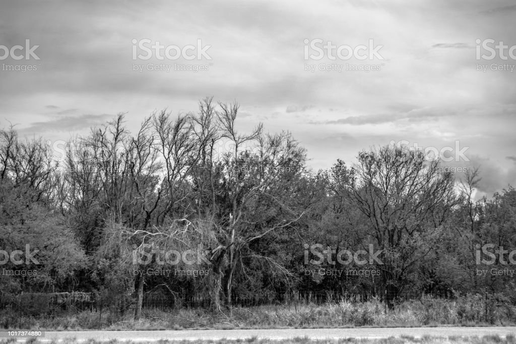 trees and clouds roadside monochroe stock photo