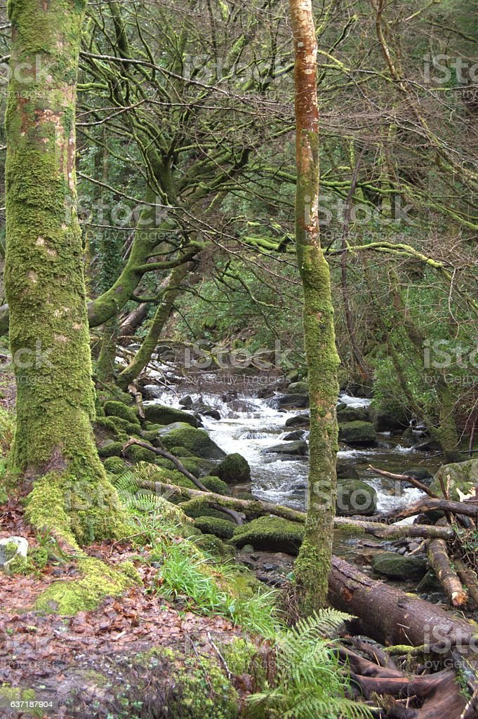 Trees and Creek in Enchanted Forest, Ireland stock photo
