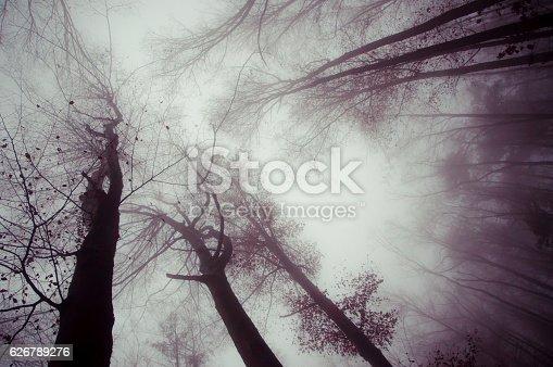forest on a dark foggy day