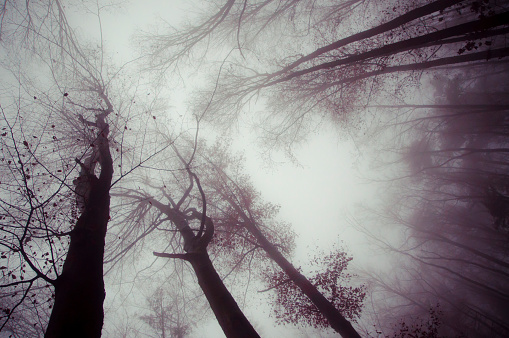 trees and dark foggy day