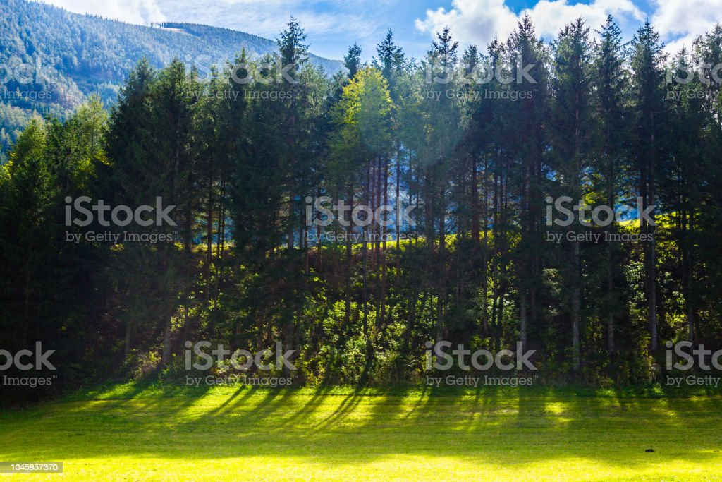 Trees And Fields In Austria Stock Photo Download Image Now Istock