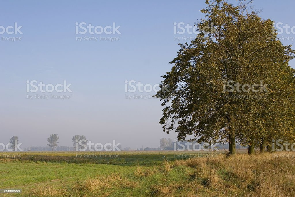 Trees and fields in Mist royalty-free stock photo