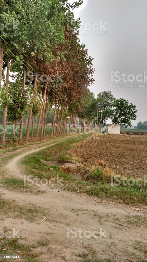 Trees and fldes royalty free stockfoto