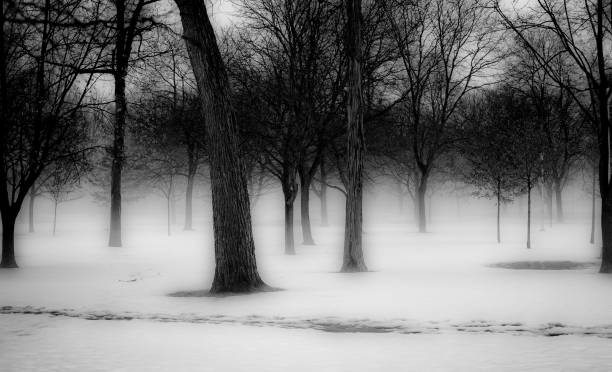 Trees and Fog in Winter stock photo