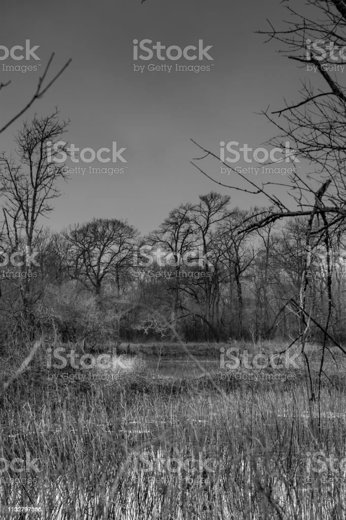 trees and grass in Texas stock photo