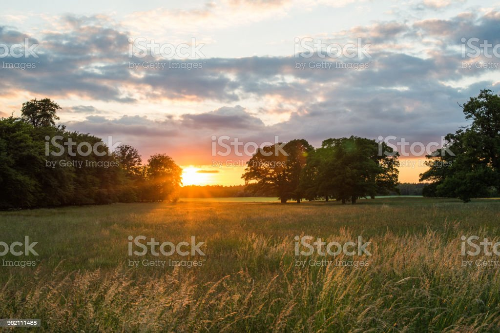 Trees and grass on the summer meadow in sunset (XXXLarge) stock photo