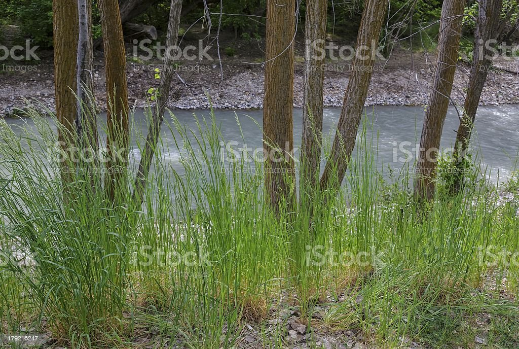 Trees and Grass royalty-free stock photo