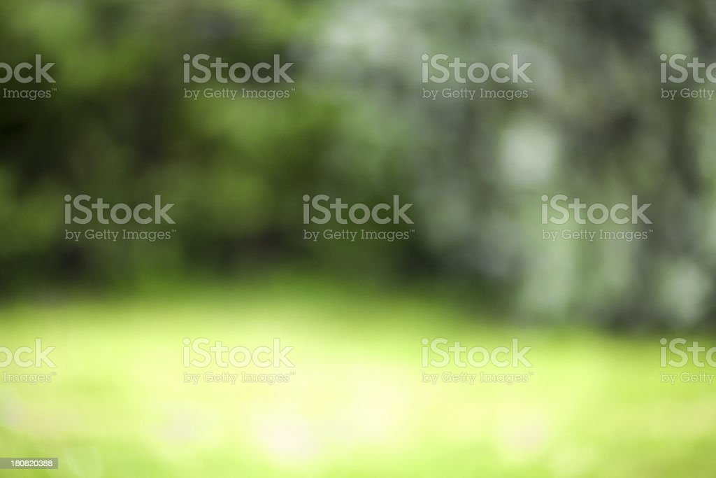 Trees and Grass stock photo