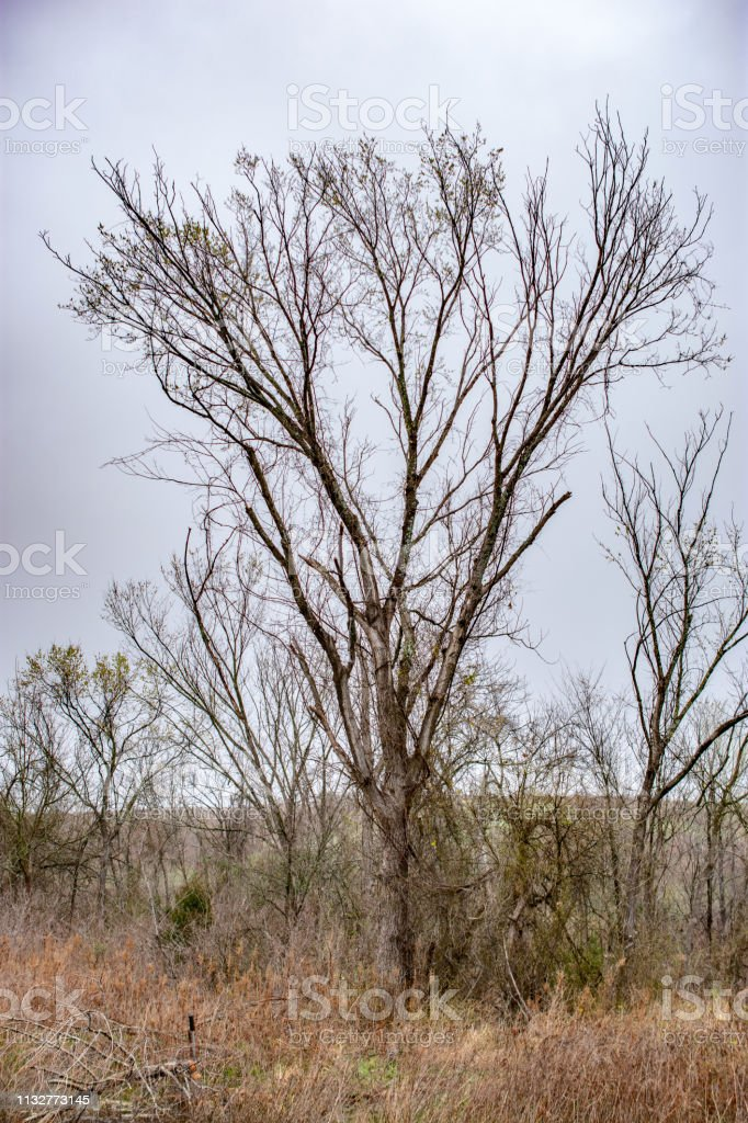 trees and grasses in Texas stock photo