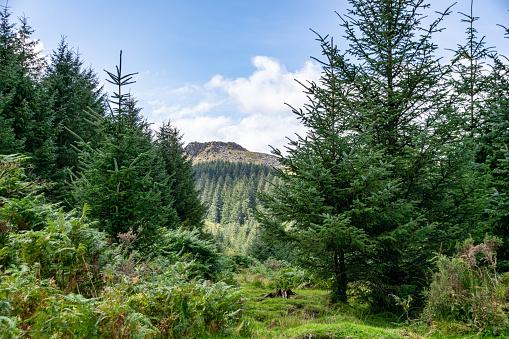 Trees and heathland of Dartmoor National Park, Devon, UK