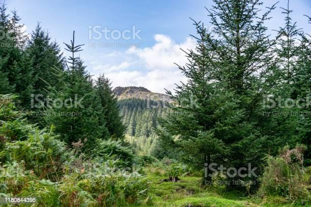 Photo of Trees and heathland of Dartmoor National Park, Devon, UK