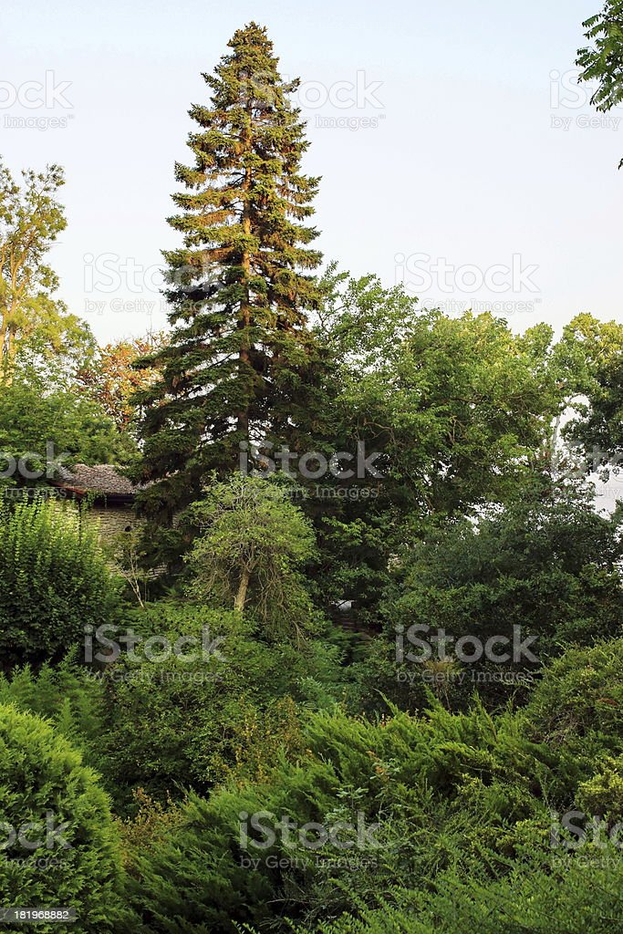 Trees and House. royalty-free stock photo