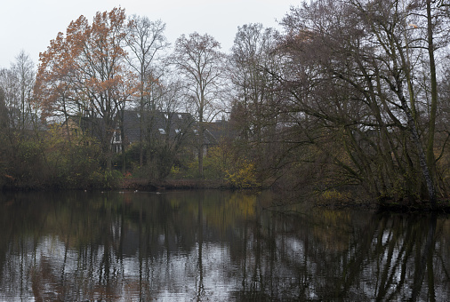 trees and houses near the lake - foggy autumn