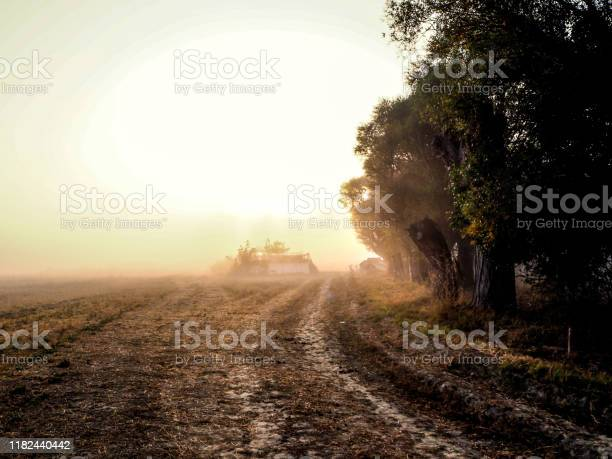 Photo of Trees and land trapped in fog at sunrise