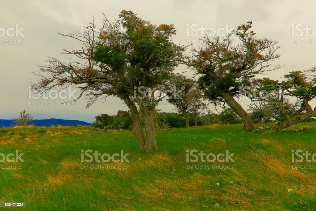 trees and meadows landscape, Ushuaia - Tierra Del fuego, Argentina – South America stock photo
