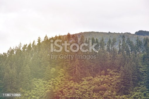 Native New Zealand Subtropical Forest with Rising Morning Mist.
