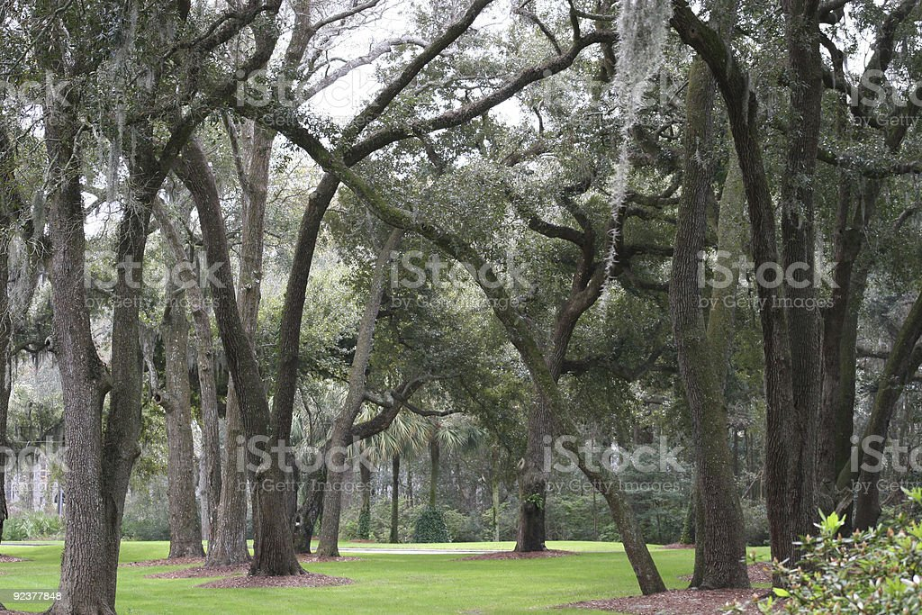 Trees and Moss royalty-free stock photo