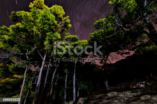 478539432 istock photo Trees and night 499334523