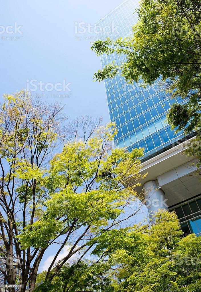 Trees and Office Buildings royaltyfri bildbanksbilder