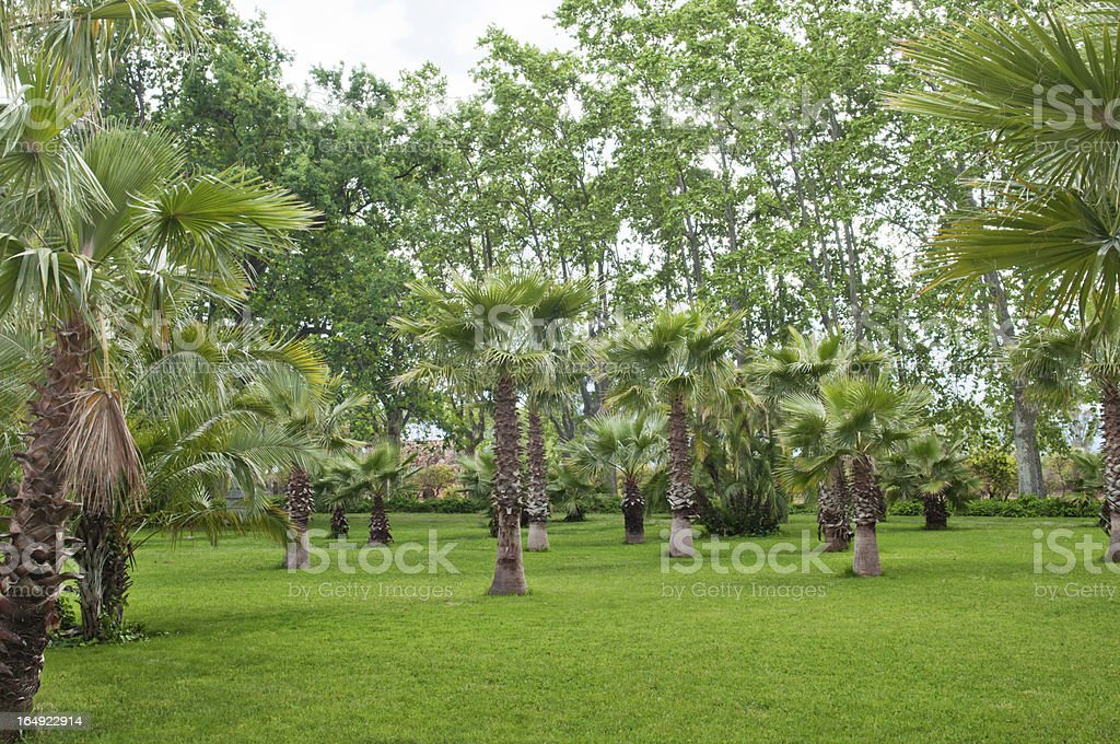 Trees and palmtrees royalty-free stock photo