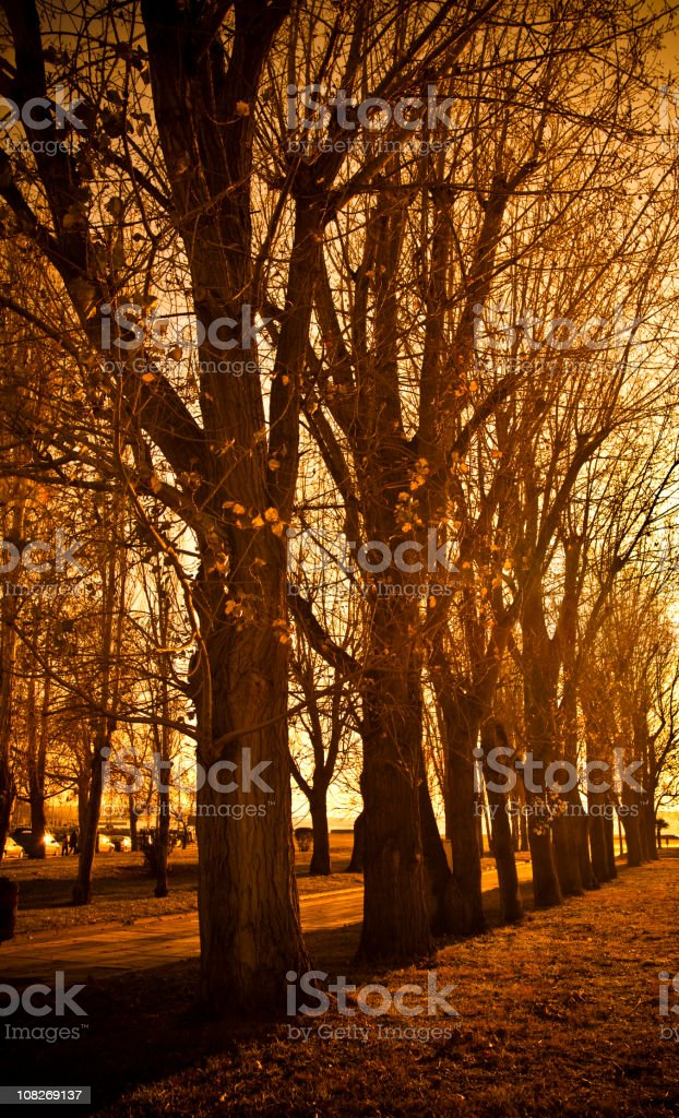 Trees and Park in Autumn royalty-free stock photo