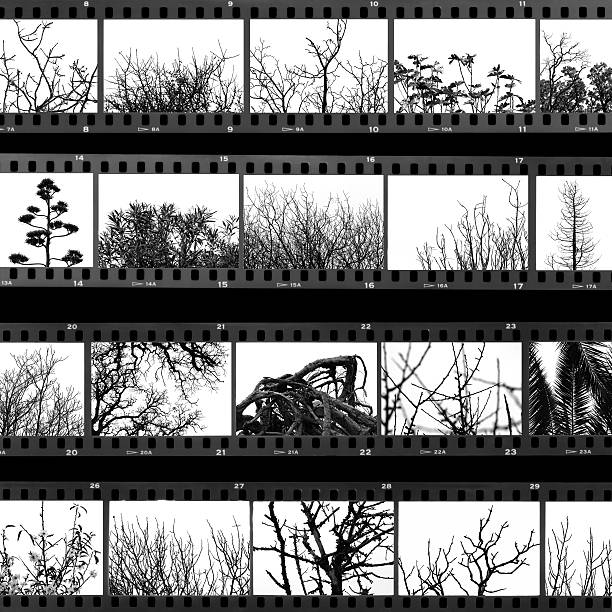 trees and plants film proof sheet Photographs of trees and plants on old film proof sheet. Digital composite, black and white. film negative stock pictures, royalty-free photos & images