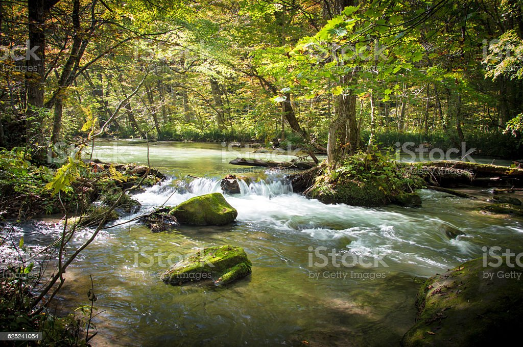 Trees and plants growing in Oirase Gorge - Stock image stock photo
