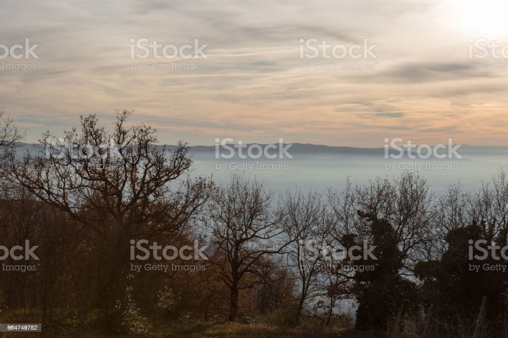 Trees and plants in autumn, over a valley filled by fog at sunse royalty-free stock photo