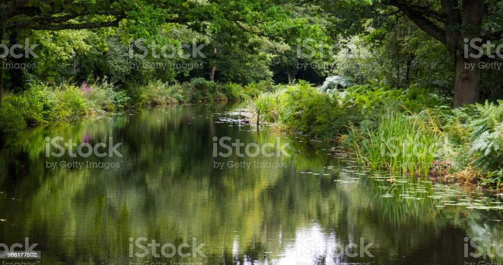 Trees and plants reflected in a summer river stock photo