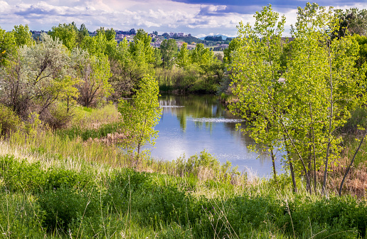 Trees and pond with reflection in a small American neighborhood, Aurora, Colorado