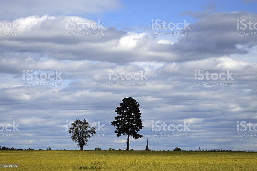 Trees and rapeseed field stock photo