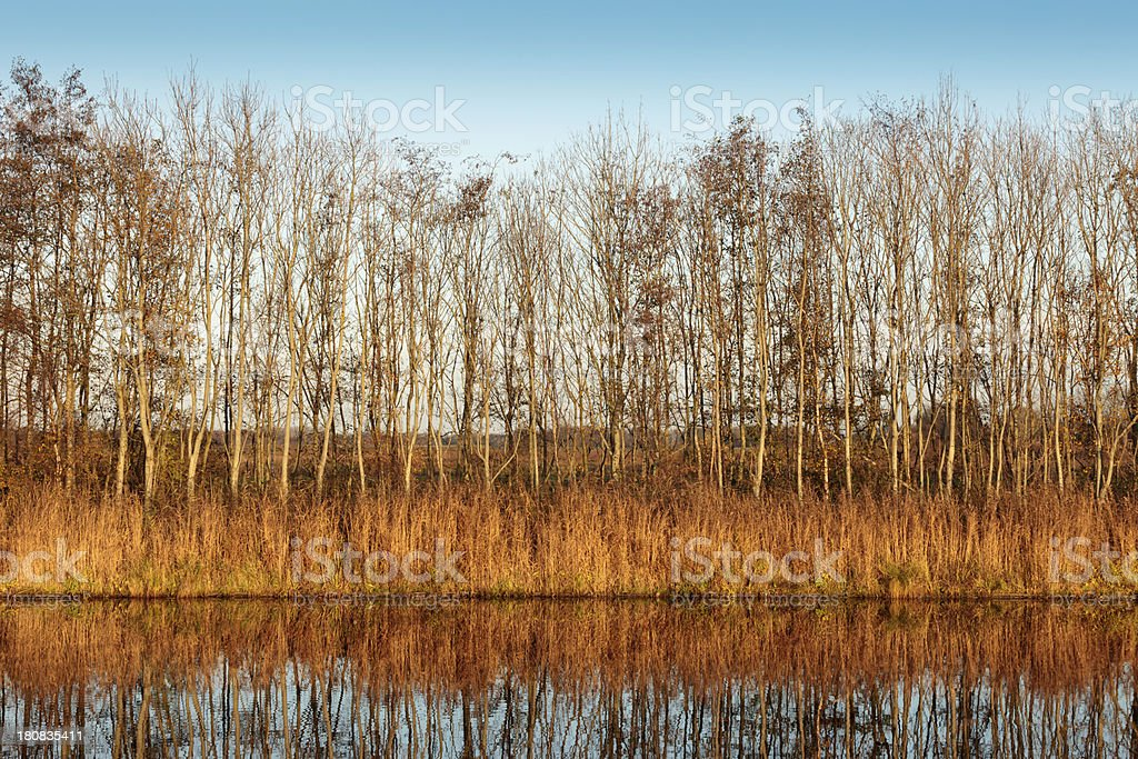 trees and reed along a canal royalty-free stock photo