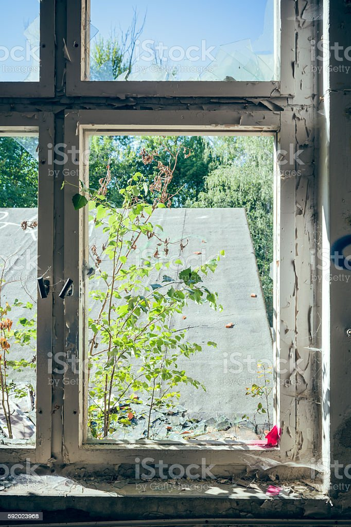 Trees and roof framed by window from inside stock photo