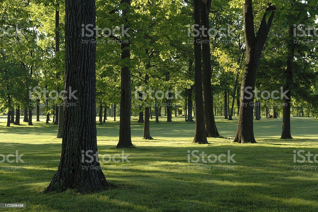 Árboles y Sombra foto de stock libre de derechos