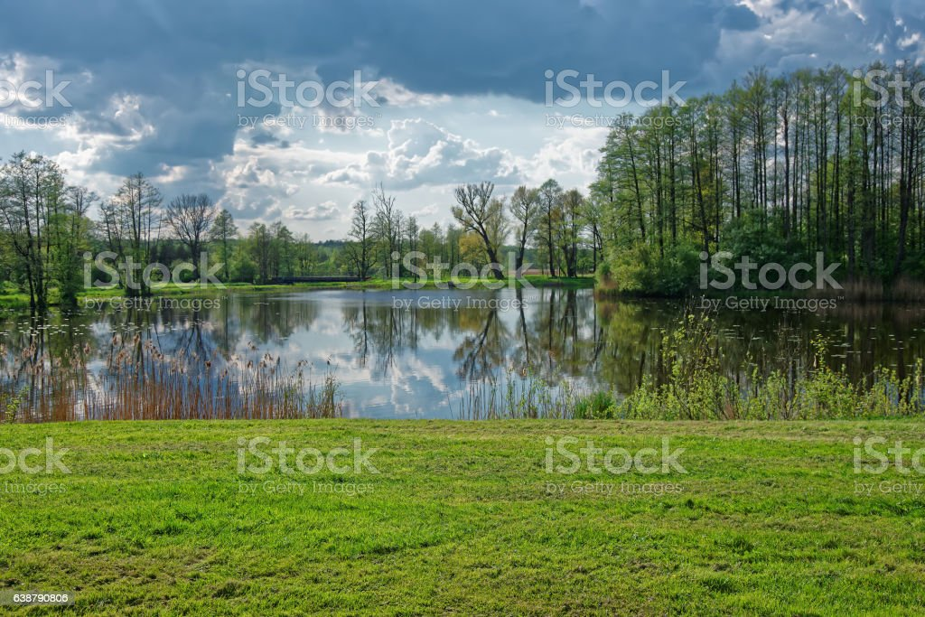 Trees and sky mirrored at pond in Bialowieza National Park stock photo