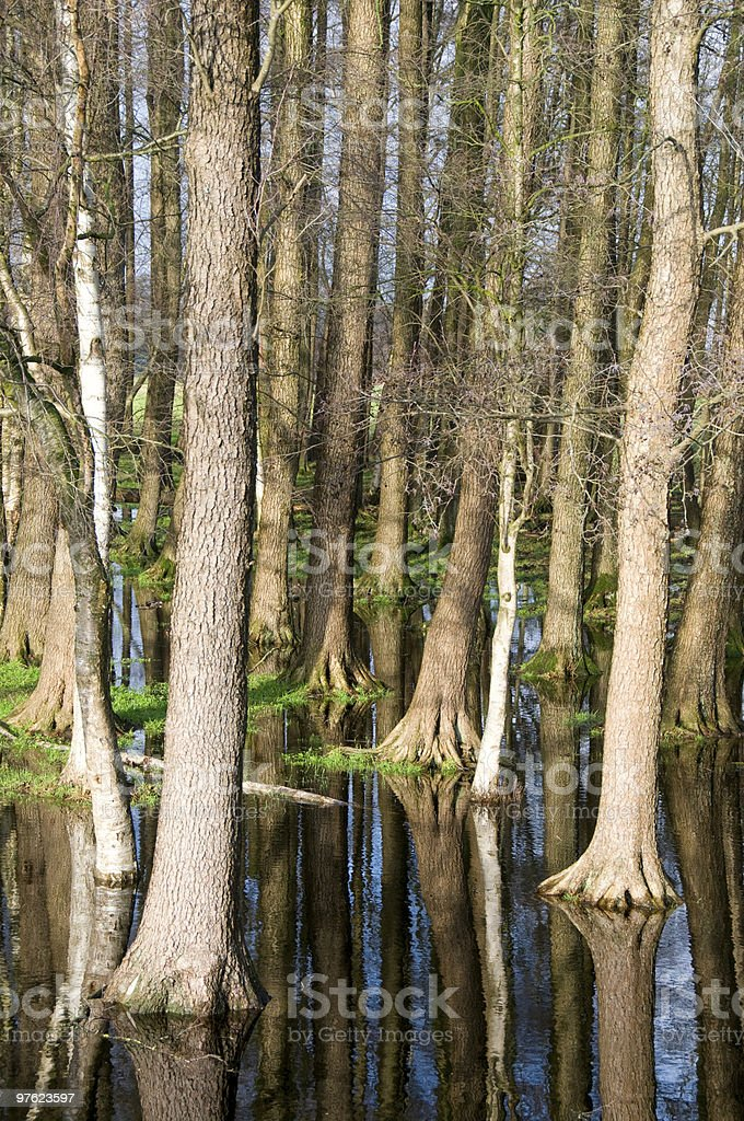 Trees and sky mirroring royalty-free stock photo