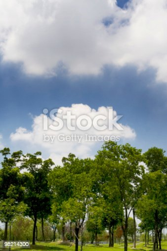 Trees And Sky Stock Photo & More Pictures of Beauty In Nature