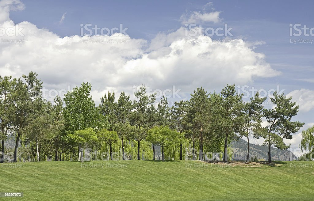 Trees and Sky royalty-free stock photo