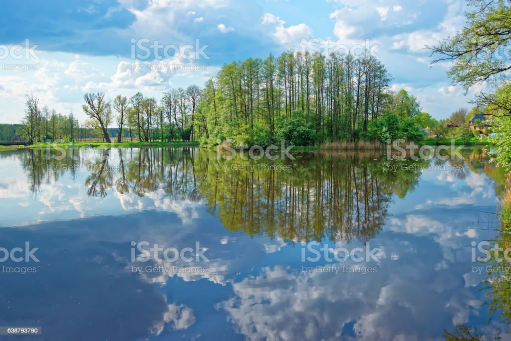 Trees and sky reflected in pond in Bialowieza National Park stock photo