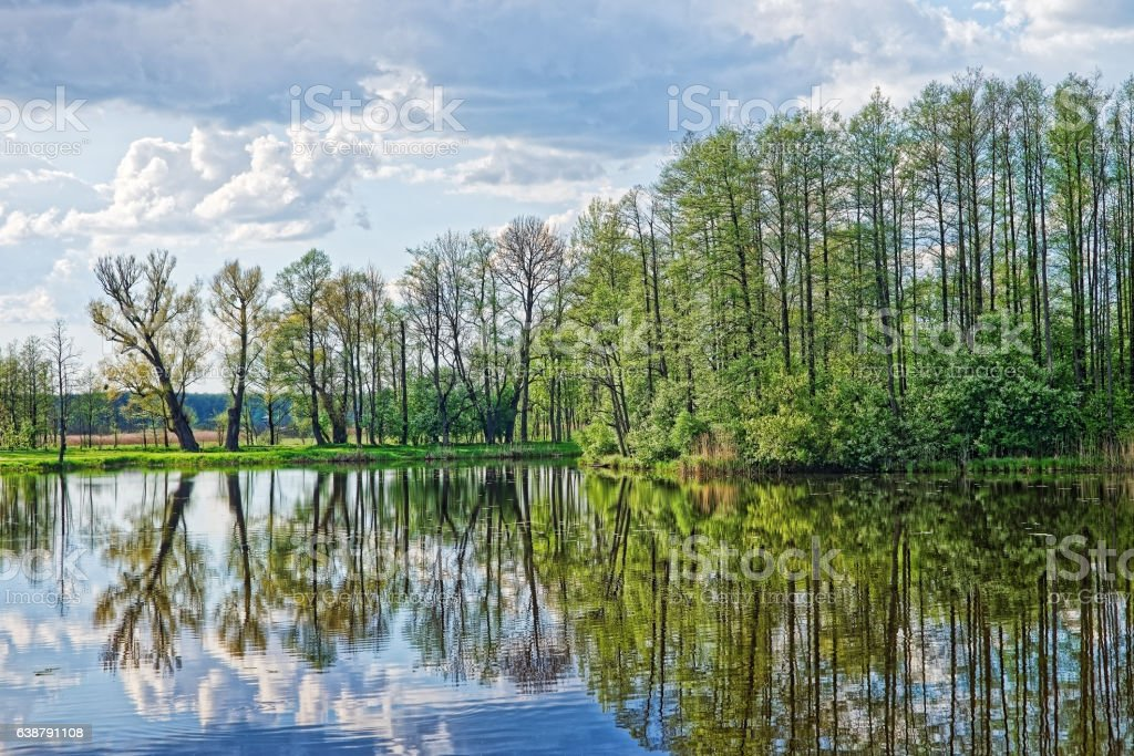 Trees and sky reflecting in pond in Bialowieza National Park stock photo