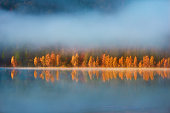 Autumn scenery at the lake, smog and vibrant colorful trees