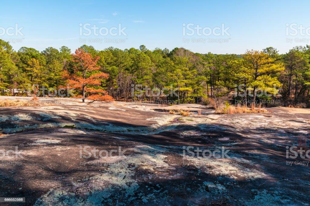 Trees and stone ground in Stone Mountain Park, Georgia, USA royalty-free stock photo