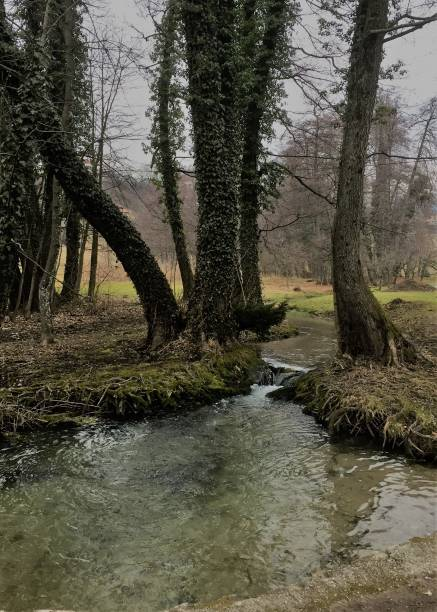Trees and stream in Bled, Slovenia stock photo