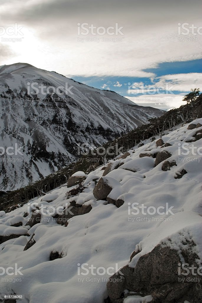 Trees and the mountain covered with snow, Torres del Paine stock photo