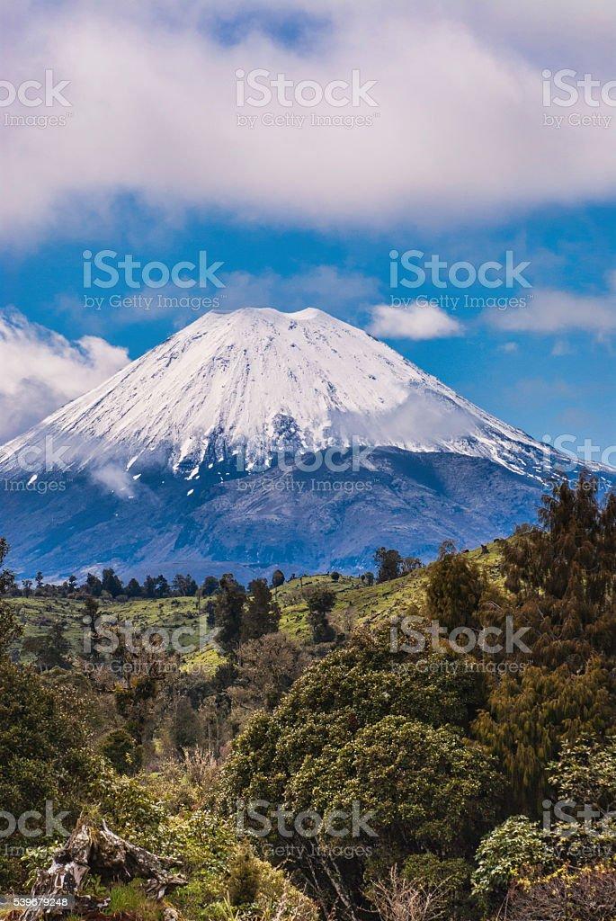 Trees and vulcano stock photo